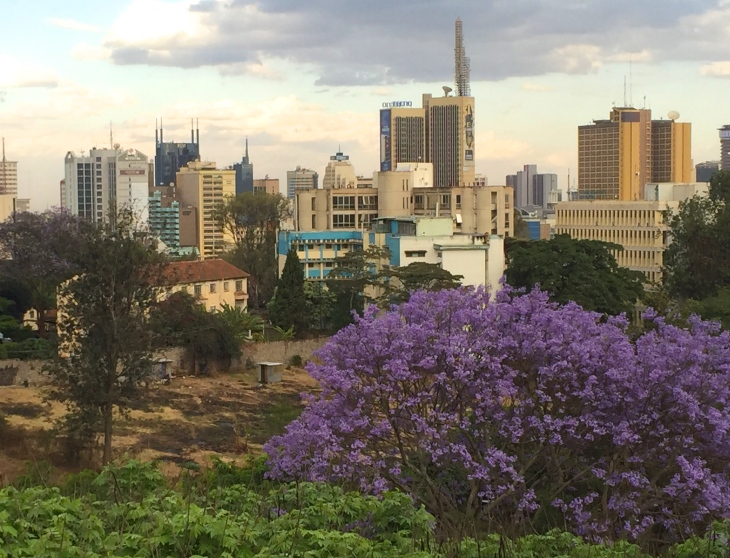 Jacarandas are dotted all across the city.