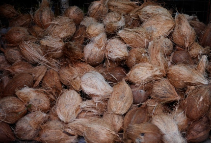 Coconuts are widely used in swahili cuisine