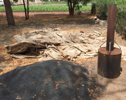 A good fertilizer here is burnt husks from the rice grown locally