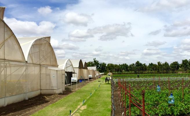 The Rijk Swaan plant breeding company